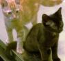 Black and Orange Kitten
