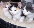 Kittens Adopted from racetrack
