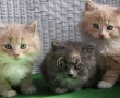 More Kittens Adopted from racetrack