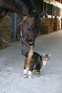 racetrack cat