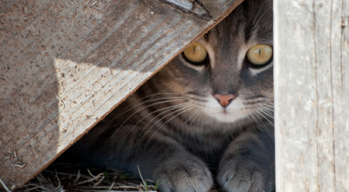 Racetrack Program for Abandoned & Feral Cats